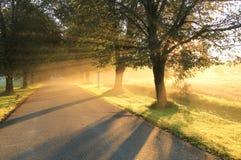 Steeg in de herfst. Stock Foto's