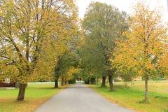 Steeg in de herfst. Stock Foto