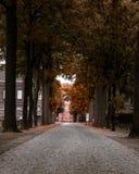 Steeg in de het meest forrest herfst stock afbeeldingen