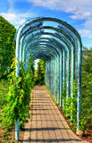 Steeg in de tuin Stock Afbeelding