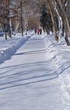 Steeg in een de winterpark Royalty-vrije Stock Foto's