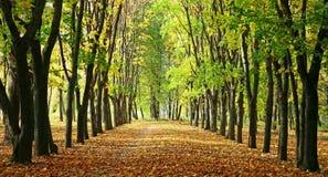 Steeg in een park met kleurrijke bomen en zonlicht stock afbeelding
