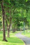 Steeg en groene bomen in park stock fotografie