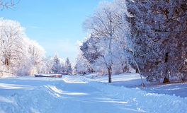 Steeg in het bevroren park royalty-vrije stock fotografie