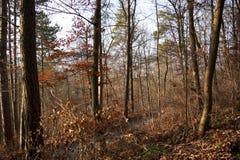 Steeg in het bos Royalty-vrije Stock Fotografie
