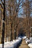 Steeg in het park Royalty-vrije Stock Afbeelding