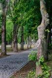 Steeg in het stadscentrum Een kleine die oase van voetpadden met tegels worden bedekt en het omzomen van bomen, vanaf de weg en h stock afbeelding