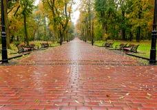 Steeg met bedekte weg aan de herfstpark Royalty-vrije Stock Afbeeldingen