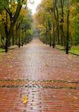 Steeg met bedekte weg aan de herfstpark Royalty-vrije Stock Fotografie