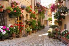 Steeg met bloemenpotten in Spello, Umbrië, Italië royalty-vrije stock foto