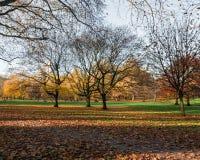 Steeg met bomen Stock Foto