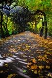 Steeg met dalende bladeren in dalingspark Royalty-vrije Stock Fotografie