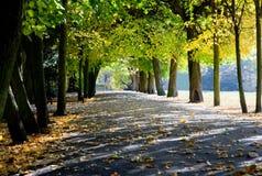 Steeg met dalende bladeren in dalingspark Royalty-vrije Stock Foto's