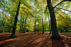 Steeg met dalende bladeren in dalingspark Stock Afbeelding
