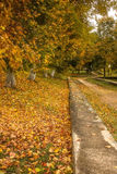 Steeg met de herfstbladeren wordt uitgestrooid in het de herfstpark dat Stock Fotografie