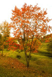 Steeg met de herfstbladeren wordt uitgestrooid in het de herfstpark dat Royalty-vrije Stock Afbeeldingen