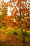 Steeg met de herfstbladeren wordt uitgestrooid in het de herfstpark dat Royalty-vrije Stock Foto