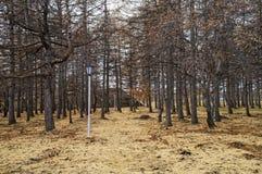 Steeg met een lantaarn in het de herfstpark stock foto