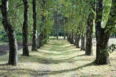 Steeg met groene bomen aan beide kanten met schaduwen over weg wordt behandeld die stock afbeelding