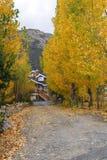 Steeg met kleurrijke Bomen stock afbeelding