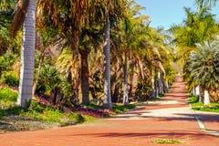 Steeg met palmen stock fotografie