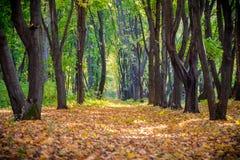 Steeg op het de herfstbos met dalende bladeren royalty-vrije stock foto