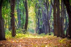 Steeg op het de herfstbos met dalende bladeren stock afbeelding