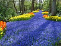 Steeg van bloemen in Nederlandse de lentetuin Royalty-vrije Stock Fotografie