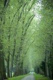 Steeg van bomen Royalty-vrije Stock Afbeelding