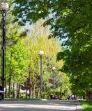 Steeg van bomen stock afbeelding