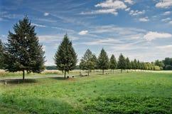 Steeg van bomen in de zomer Royalty-vrije Stock Fotografie