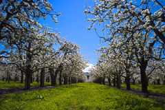 Steeg van de lenteheropleving Stock Afbeelding