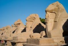 Steeg van de Sfinxen, Luxor stock afbeeldingen