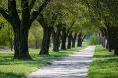 Steeg van groene bomen in stad royalty-vrije stock afbeeldingen