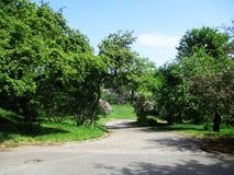 Steeg van het botanische park met lilac struiken Stock Foto