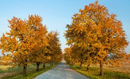 steeg van kersenbomen Royalty-vrije Stock Afbeeldingen