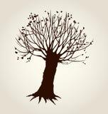 Steeg van leafless bomen Vector tekening vector illustratie