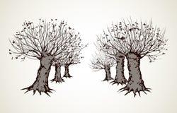 Steeg van leafless bomen Vector tekening stock illustratie