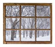 Steeg van oude iepbomen in blizzard Royalty-vrije Stock Afbeeldingen