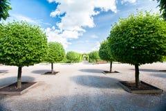 Steeg van ronde gevormde basswood groene bomen in siertuin Stock Fotografie