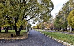Steeg voor gangen met oude bomen, de herfst stock foto