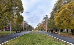 Steeg voor gangen met oude bomen, de herfst stock afbeeldingen