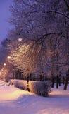 Steeglichten en sneeuw behandelde bomen Royalty-vrije Stock Foto