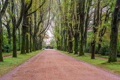 Steegweg met lang van de het grintgang van het bomen groen gras van de de wegmanier de wegpark Royalty-vrije Stock Afbeelding