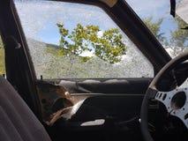 Steeing hjul f?r gammalt exponeringsglas f?r bil brutet arkivfoton