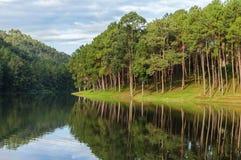 Steek ung meer, pijnboom bospark met bezinning van pijnboom in Maehongson, Thailand Stock Afbeeldingen