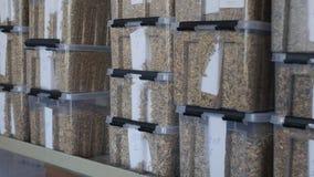 Steekproeven van korrels van tarwe, gerst in container voor kwaliteitscontrole of analyse stock footage