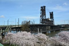 Steel Bridge and Cherry Blossoms in Portland, Oregon. This is the historic Steel Bridge over the Willamette River in Portland, Oregon with the blossoms from Royalty Free Stock Image