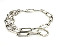 Steel dog collar on white background Royalty Free Stock Images