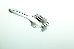 Steel Fork and flower. Steel Forks with daisy flower on shiny mirror surface Royalty Free Stock Photography